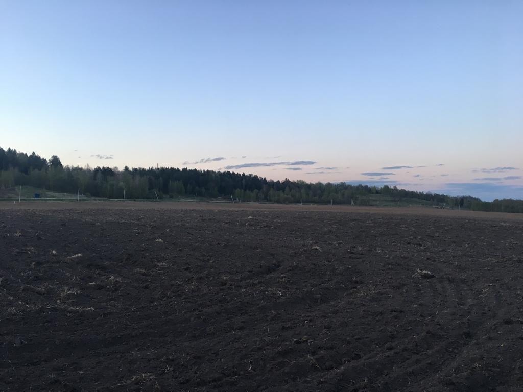 темное пятно на поле - селище